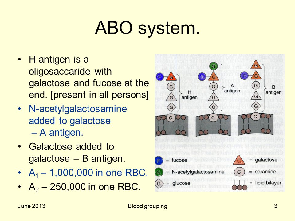ABO system. H antigen is a oligosaccaride with galactose and fucose at the end. [present in all persons]